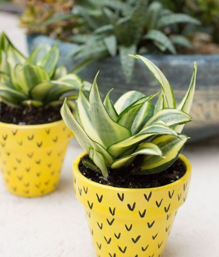 s 14 pineapple tastic projects perfect for tropical fun, Plant A Small Planet In A Tropical Pot