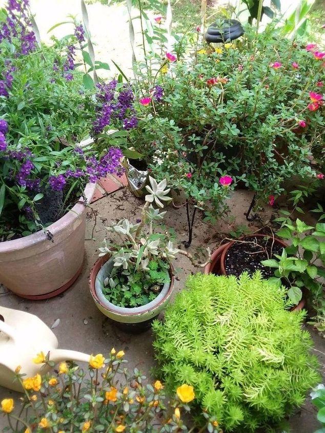 my porch garden
