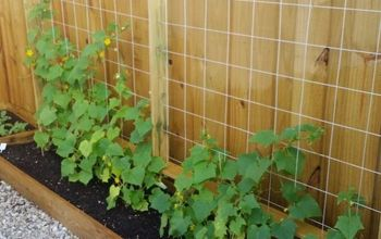 Cucumber Trellis for Under $20