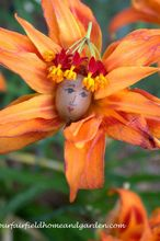 flower fairies a little garden magic from our fairfield home garde