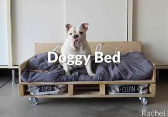 5 awesome diy projects that will make your dog happy every day