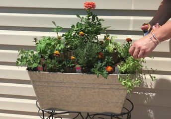 5 clever herb gardens for the crafty gardener