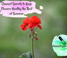 chemist secrets to keep flowers healthy the rest of summer