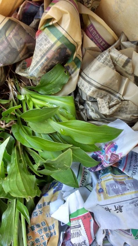 q i ve dug up some baby hostas to give away i realized that