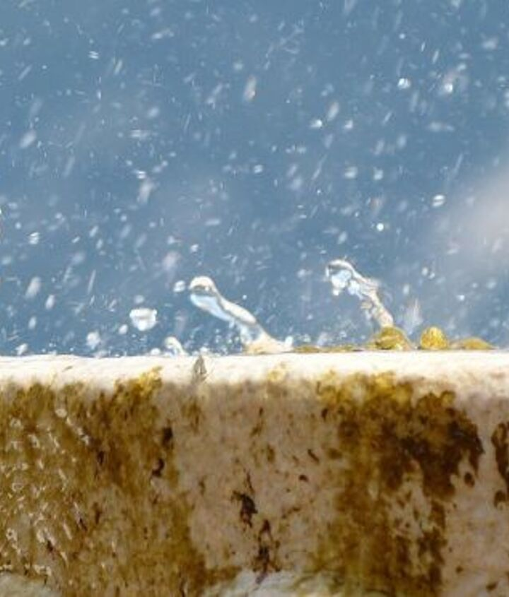 birdbath simple tips and tricks for cleaning