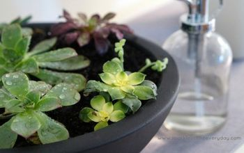 The Tips to Growing Beautiful Succulents!