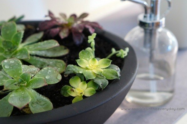 the tips to growing beautiful succulents