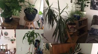 , I want to show you my plants so you have an idea or maybe give me advice on the problem