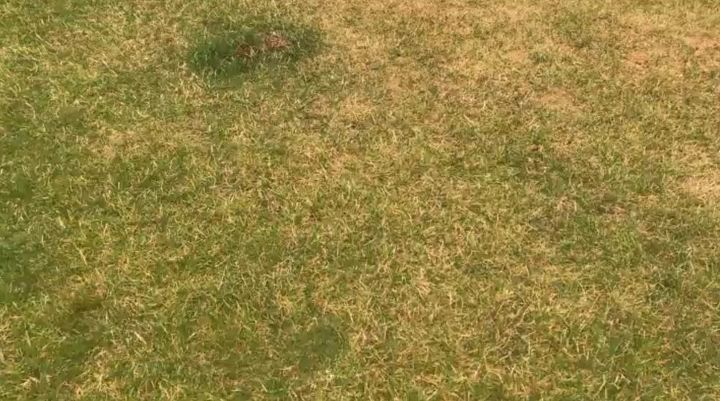 fix burnt grass dog urine spots with this easy solution