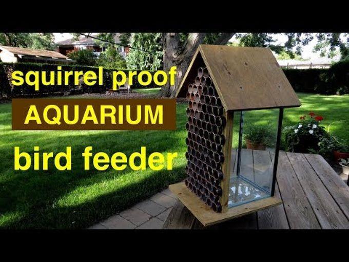 make a squirrel proof bird feeder from a 10 gallon aquarium