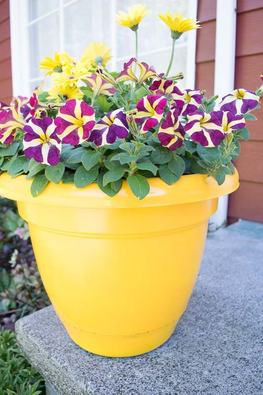 quick and easy ways to spruce up your front porch
