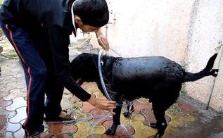 diy dog washer ring