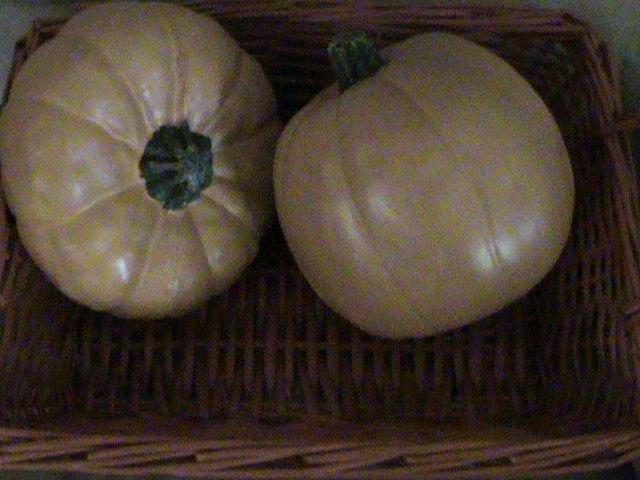 new color for old pumpkins