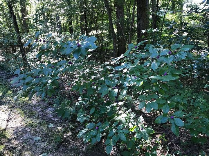 t southerners looking for great naturalizing landscape