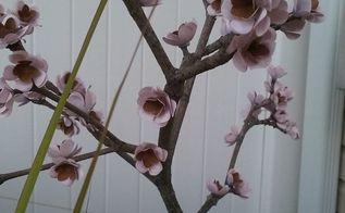 faux bonsai