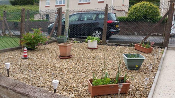 q flowers outside in pots