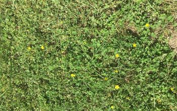 What product gets rid of clover with little yellow flowers?