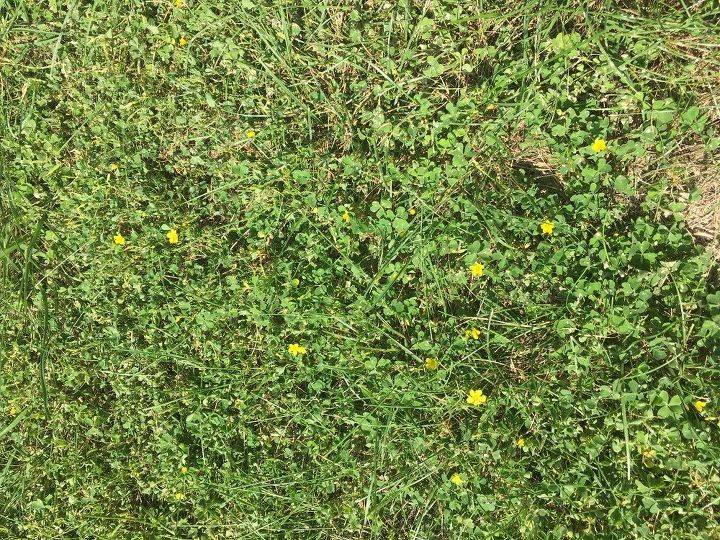 What Product Gets Rid Of Clover With Little Yellow Flowers