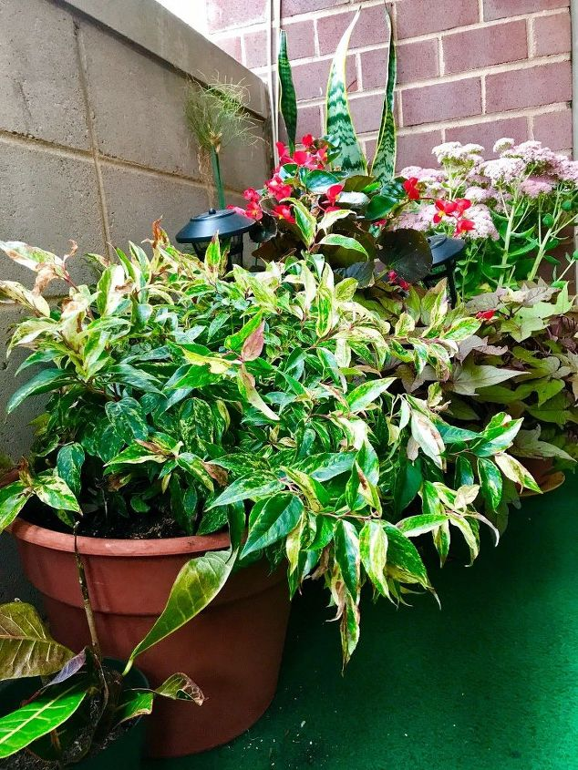 q how can we better care for our plants