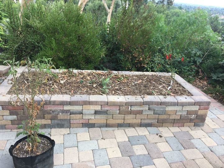 q what cover crop should i grow in my backyard kitchen gardens