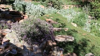 , Use large flat rocks as pavers set plant soapwort and thyme between