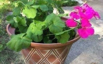 how to keep large plant pots light enough to move around