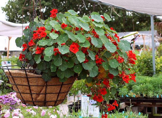 10 ideal hanging basket plants to beautify the front of your home