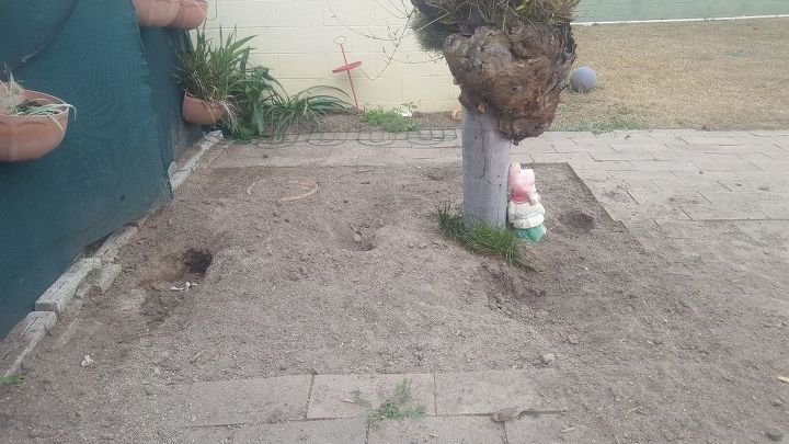q what can i do plant to keep the dogs from digging
