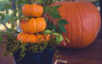 Simple Mini Pumpkin Topiary
