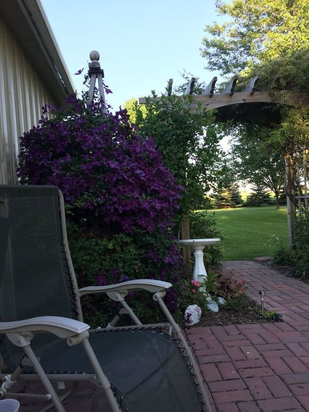 q can i trim my wistera now in the fall