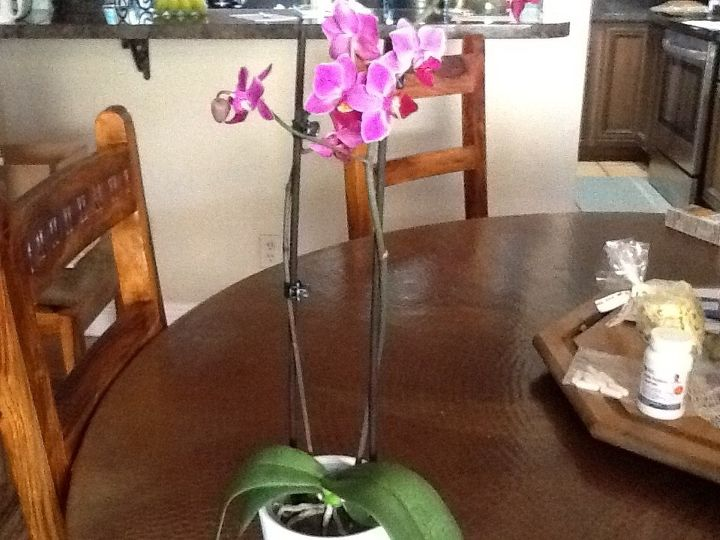 q care of an orchid plant