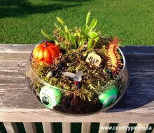 venus flytrap halloween terrarium