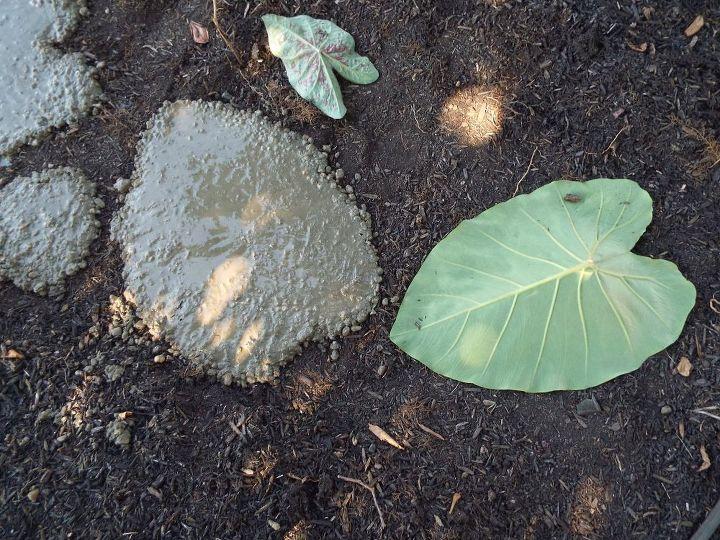 Giant Elephant Ear Plant Stepping Stones Hometalk