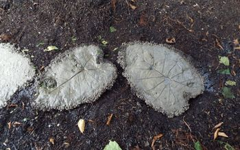giant elephant ear plant stepping stones
