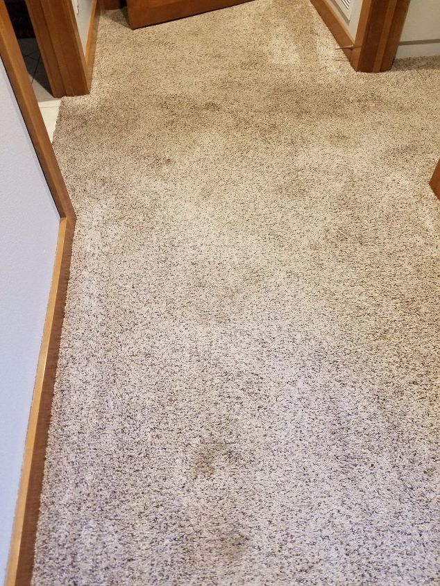 q home remedies for dog urine stains in carpet