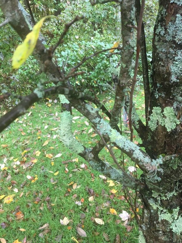 q tree issue