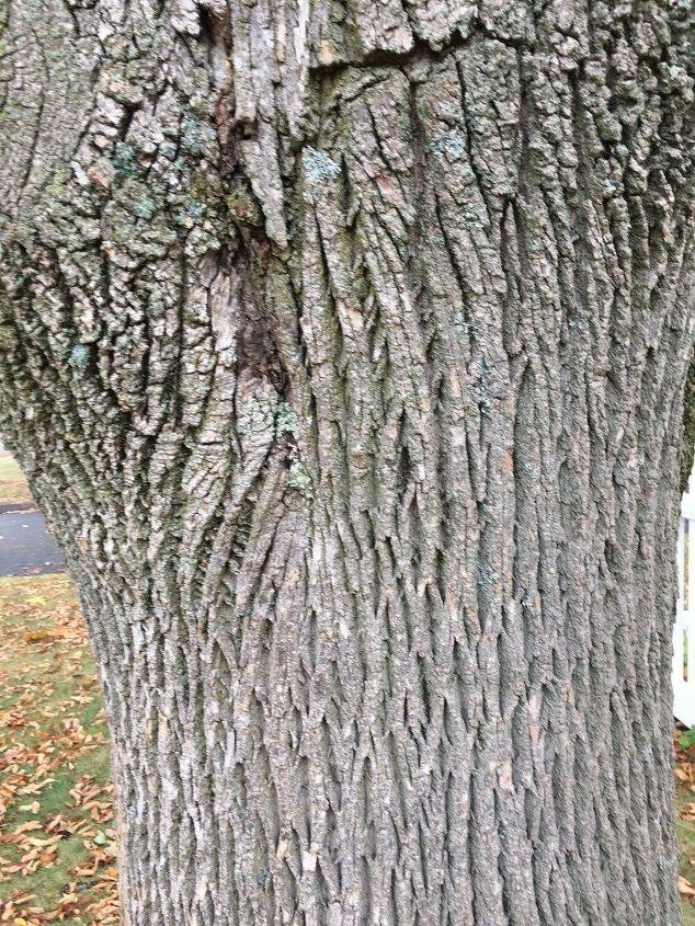 q help identifying this tree
