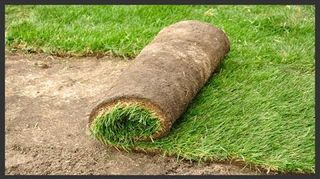 q can we lay sod directly on top of gravel will it take up root