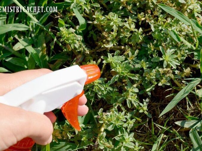 amazing benefits of vinegar in the garden why it works