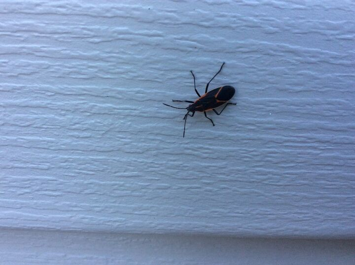 q how do i get rid of these bugs they have invaded the outside of house