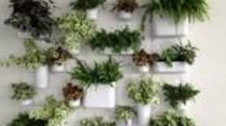 , Plant wall in the opposite area The change I would make to this is put teak on the wall and use teak boxes for the plants Incorporate several vine plants