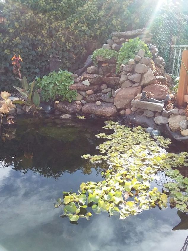 Our Waterfall with Jurassic Lettuce in Front