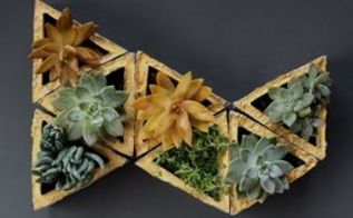 9 easy ways to decorate your home with succulents