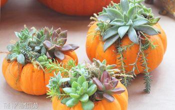 how to make mini pumpkin succulent planters, How to Make Mini Succulent Pumpkin Planters