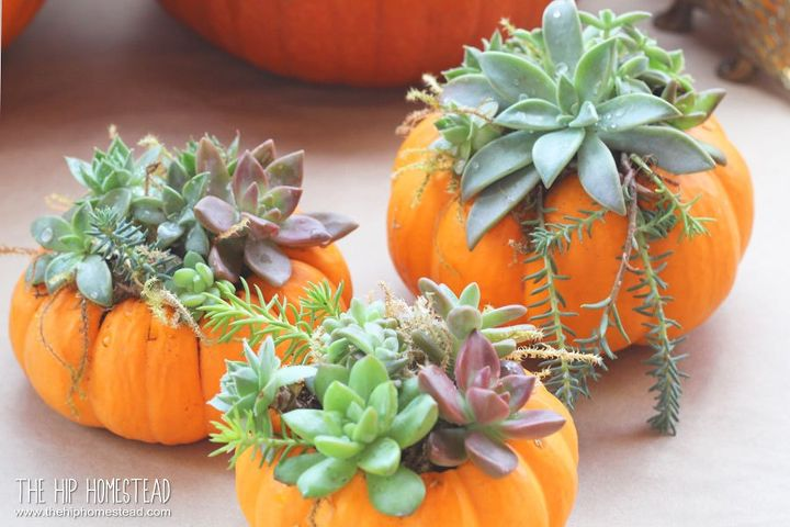 How to Make Mini Succulent Pumpkin Planters