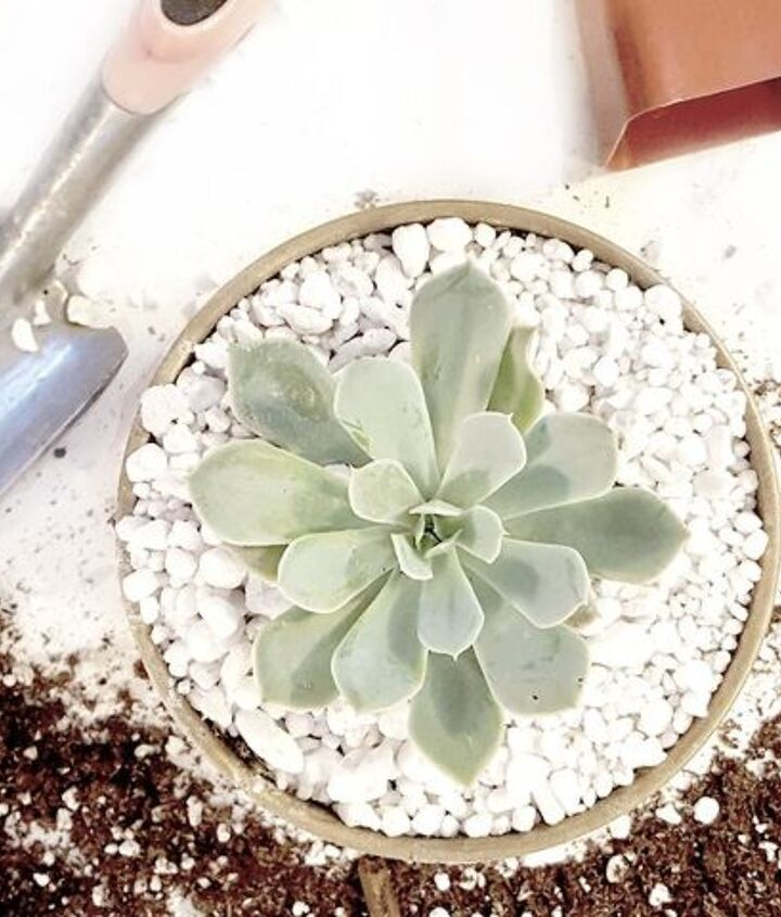 how to pot up succulents