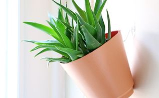 add a vertical garden to your kitchen