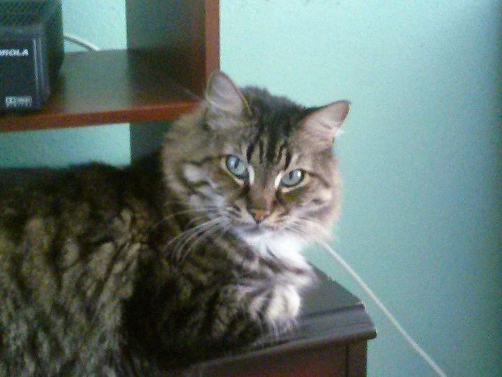 q cat hairs