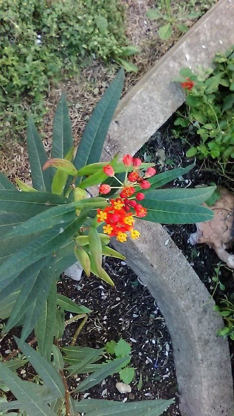 q what s the name of this plant