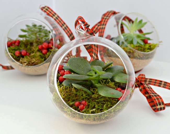 s 25 adorable ornament ideas to get you super excited for christmas, Add Live Succulents as Ornaments